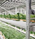 cannabis-two-level-vertical-grow_REVISED